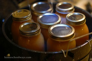 Jars with applesauce before being lowered in a water bath canner