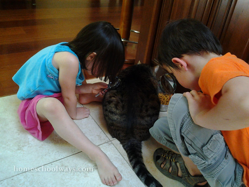 Children observing cat with magnifying glasses
