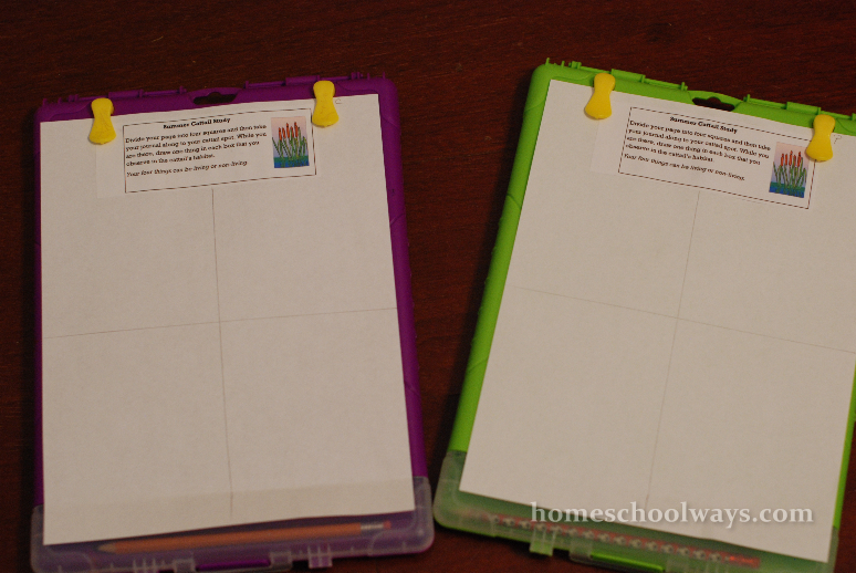 Summer Cattail Notebooking Pages