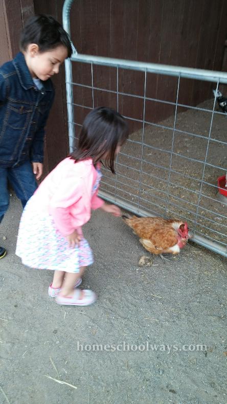 Children petting a Naked Neck hen.