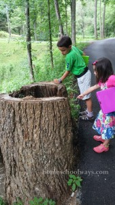 Boy and girl looking inside a hollow tree trunk