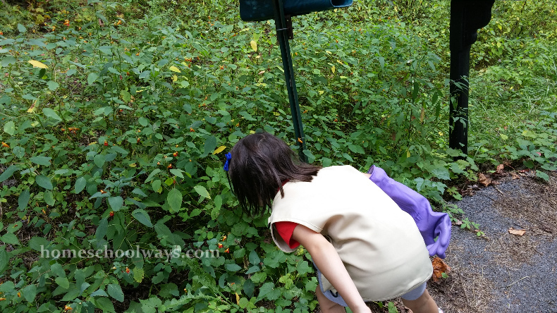 Girl looks at jewelweed plants