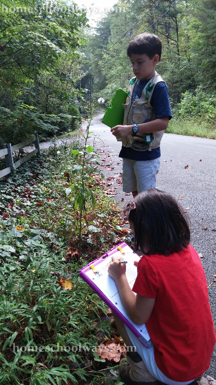 Boy and girl sketching a prickly lettuce