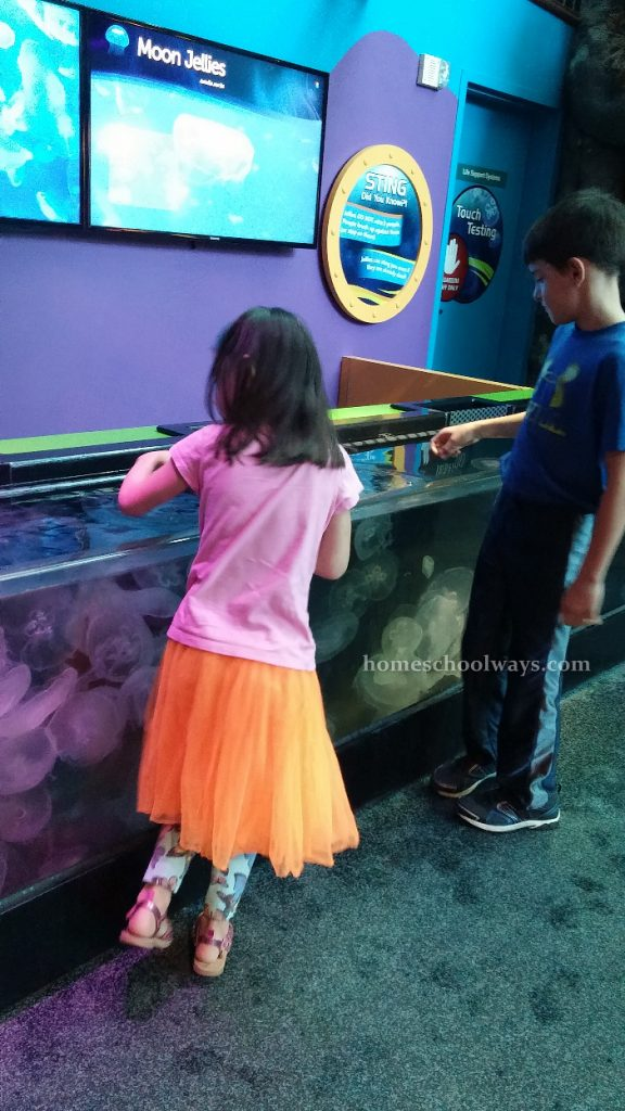 Boy and girl touch jelly fish at Ripley's Aquarium
