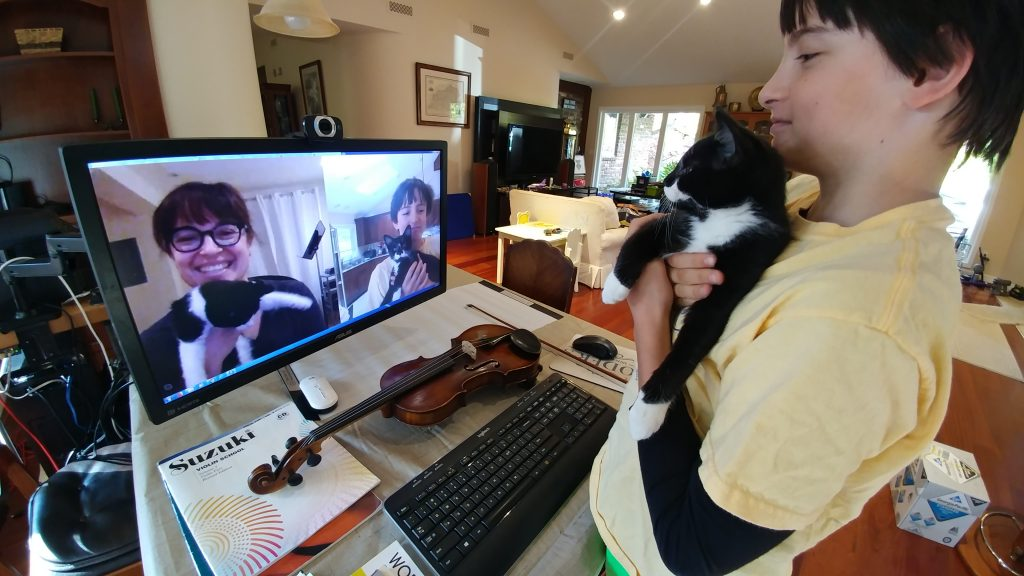 Kittens meet via Skype