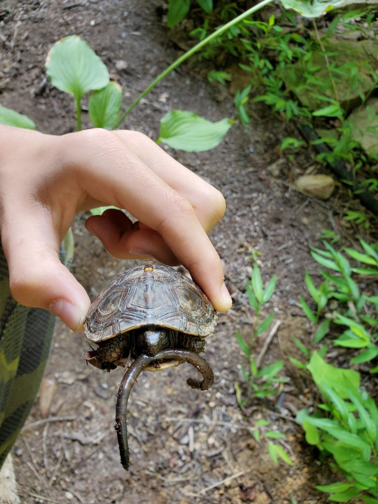 Turtle with Worm