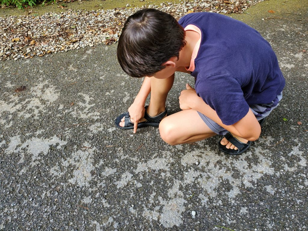 Boy observes insect