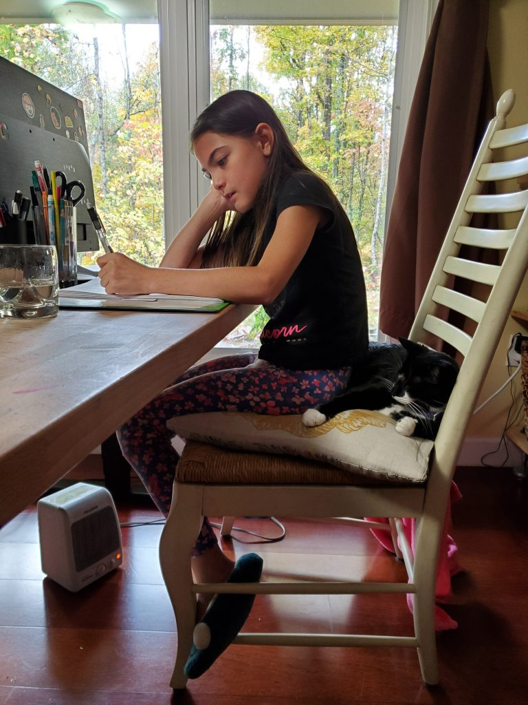 Cat shares chair with studying girl